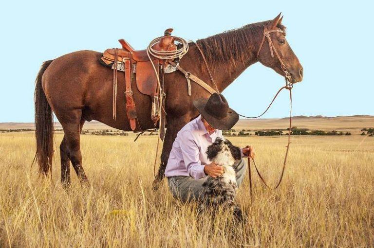 Horsemanship: feel, timing e balance Luciano Rodrigues comenta em sua coluna sobre os conceitos de 'feel, timing e balance' de Bill Dorrance e Tom Dorrance