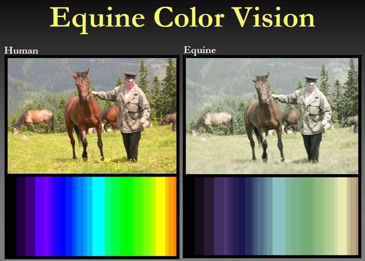 Os cavalos podem ver cor? É importante que você entenda como o seu cavalo vê o mundo