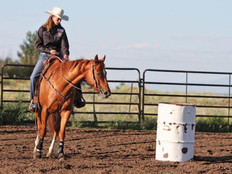 Comunicação com os cavalos: o que realmente significa? Claudia Ono fala na coluna da semana sobre o desejo de ter o melhor do seu cavalo pautado na busca por saber como ele entende as suas ações