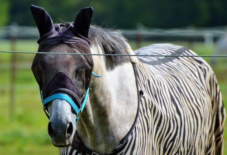 3 etapas para reduzir moscas em sua propriedade Tome medidas para deixar seu cavalo confortável e livre de moscas
