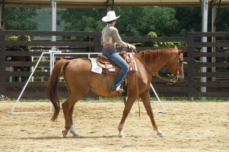 5 maneiras de acalmar um cavalo nervoso Se cavalo é ansioso ou nervoso? Ajude-o a manter a calma e evitar um colapso