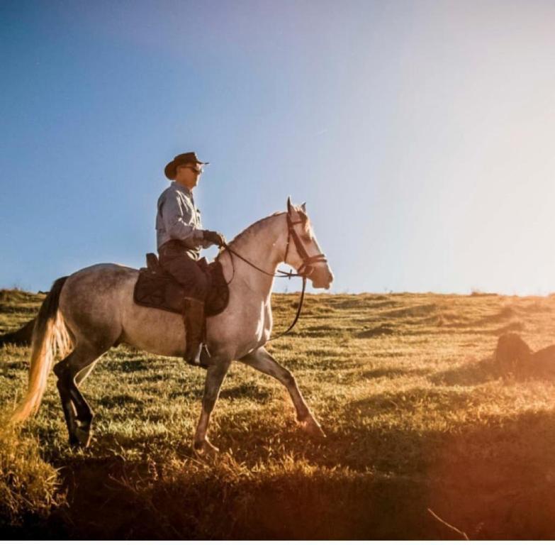 Cavalgada em Cavalos Marchadores Dando continuidade aos tipos de cavalgada, Paulo Junqueira escreve essa semana sobre as cavalgadas com cavalos marchadores