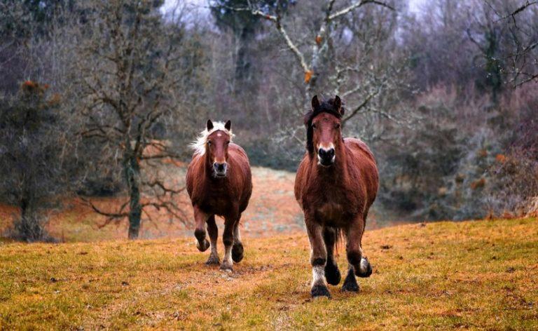 Ionóforos e equinos: uma combinação fatal As rações contendo ionóforos são muito perigosas para os equinos por conta de sua sensibilidade