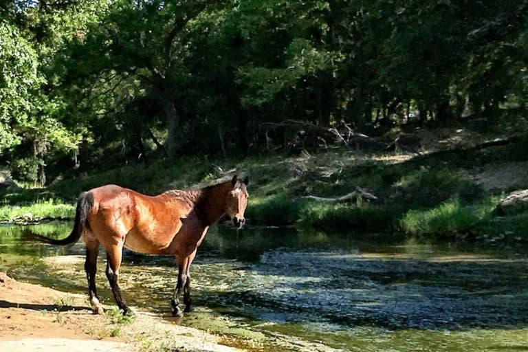 Ty Murray cria curral de cavalos de rodeio aposentados Estrelas das arenas, que foram destaque por diversos anos durante as competições da National Finals Rodeo, agora têm seu descanso merecido ao lado do campeão mundial