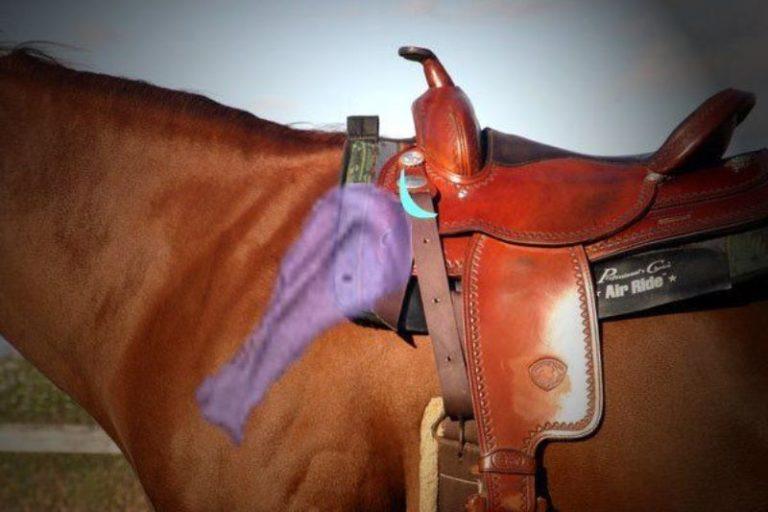 A sela pode mudar o comportamento e a performance do seu cavalo? Claudia Ono, em sua coluna da semana, diz que sim e te explica porque