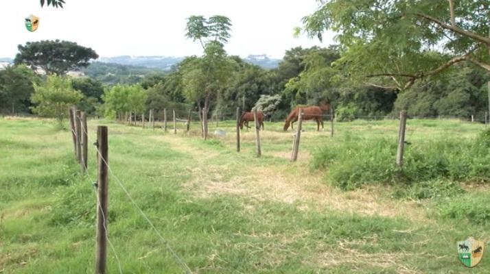 Cerca elétrica x outras cercas para cavalo. O Mensagem a Cavalo da TV UC de hoje vai trocar uma ideia com você a respeito de cerca elétrica