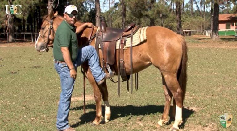 O Mensagem a Cavalo da TV UC de hoje conversa com você sobre as maneiras corretas de se montar um cavalo