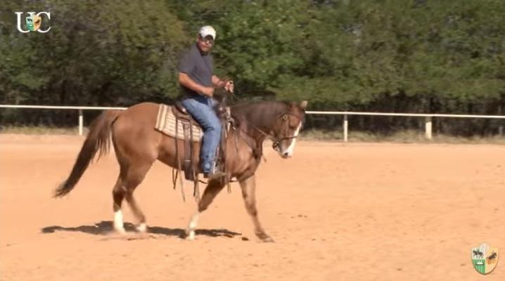 Mensagem a Cavalo da TV UC conversa com você a respeito do flexionamento vertical do cavalo saindo do processo de doma