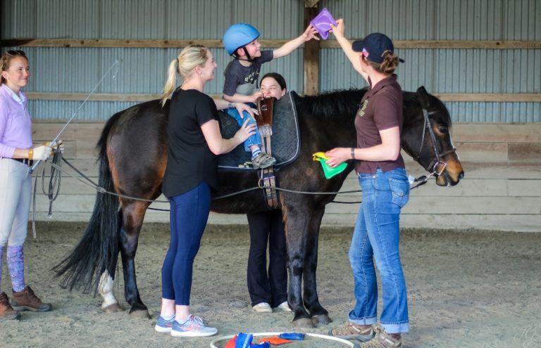 Benefícios da Equoterapia no tratamento de doenças equinas Os cavalos necessitam de uma boa alimentação para ter maior desempenho em diversos setores, como o seu uso ainda para o combate ao estresse e a depressão