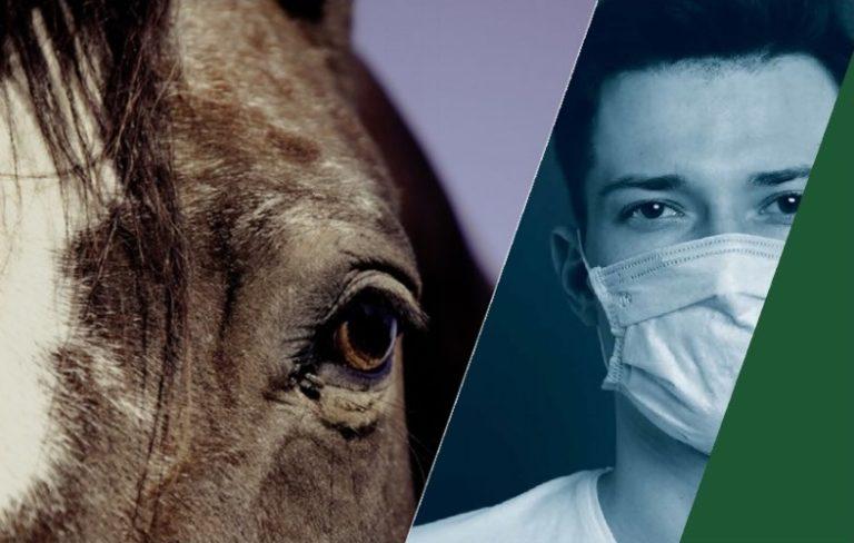 Associações de raça e modalidade e organizadores provas equestres, como no Hipismo, mantêm-se ativos ao elaborar protocolos de segurança para a retomada