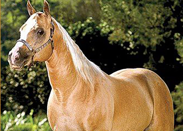 O baio amarilho, nascido em 1993, um dos grandes animais de derrubar boi em sua época, Eternaly Steel FB também se prova como produtor de campeões