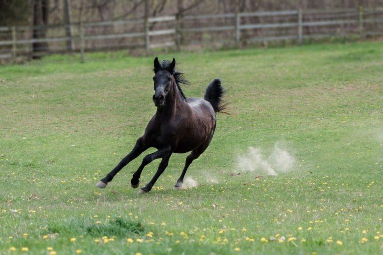 Luciano Rodrigues, cavaleiro e pesquisador, discorre sobre prioridades, necessidades, planejamento para quem deseja ter um cavalo
