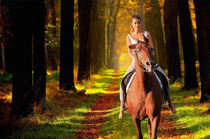 Por que os proprietários de haras não montam os cavalos que criam? Esse é um assunto abordado por Aluisio Marins nosso parceiro no portal Cavalus