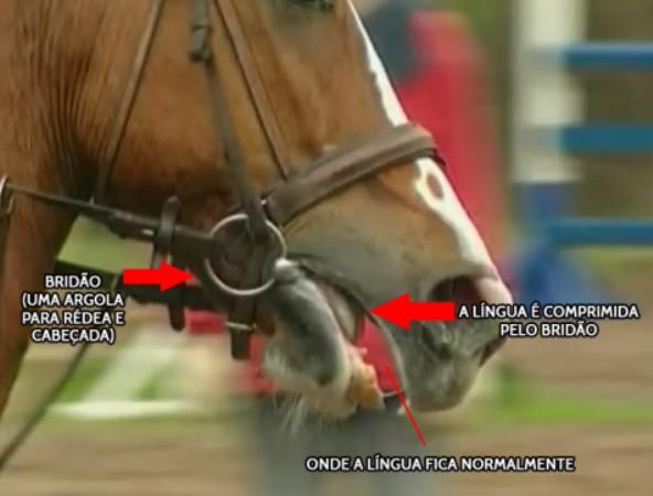 A afirmação de que embocaduras não causam dor nem medo no seu cavalo não é verdadeira e quem fala sobre o assunto é a colunista Claudia Ono