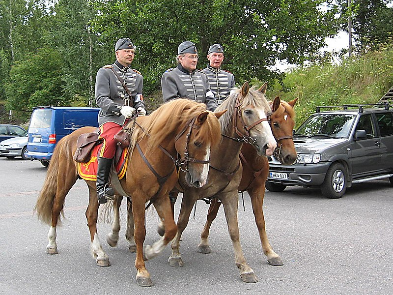 O Finnhorse é uma raça natural e única da Finlândia e ainda são animais considerados de 'sangue frio', rápidos e versáteis!