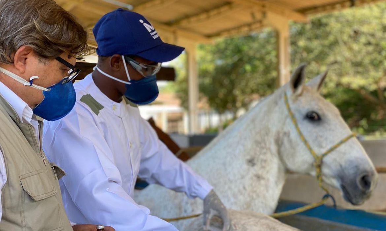 Anticorpos de cavalos contra Covid é até 100 vezes mais potente que o vírus, diz estudo