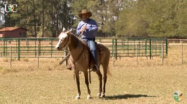 O cavalo de cavalgada precisa de força de garupa, para se sustentar durante o passeio. Assim como precisa de leveza de frente. Veja!