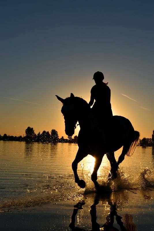 Andar a cavalo na praia não é tão comum para algumas pessoas. Por isso, torne esse momento memorável por todos os motivos certos!