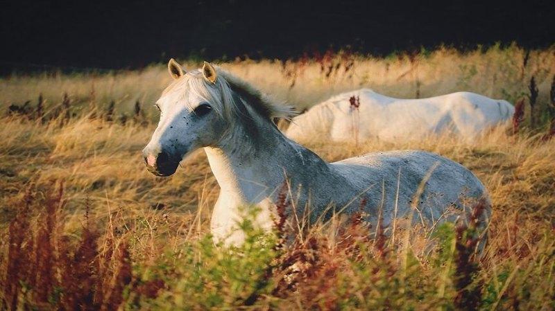 Os equinos, são animais herbívoros, precisam de mais de volumoso do que concentrado em sua dieta, então como fornecê-lo?