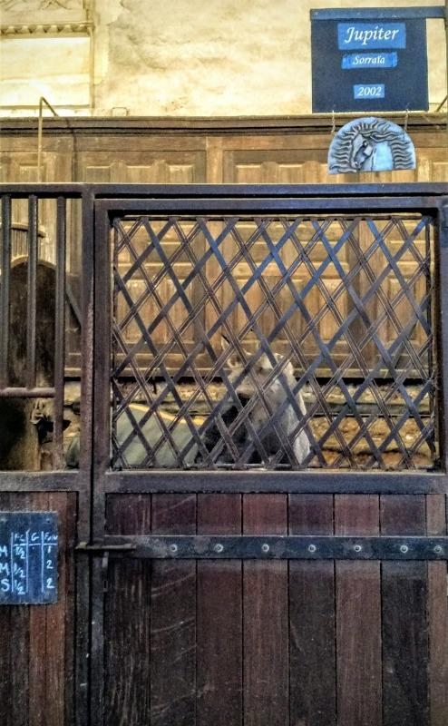 Paulo Junqueira comenta sobre a perspectiva equestre como legado histórico e a relação entre os humanos e os cavalos ao longo da história