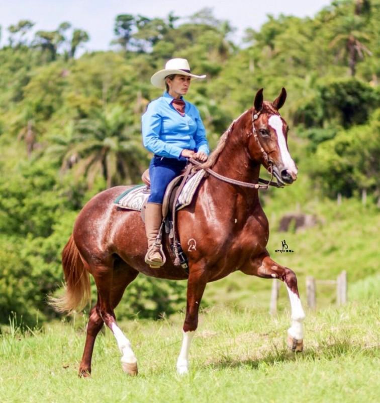 Dalva Marques fornece dicas importantes para ajudar você na participação dessas concorridas Copas da Marcha, preparação dos cavalos
