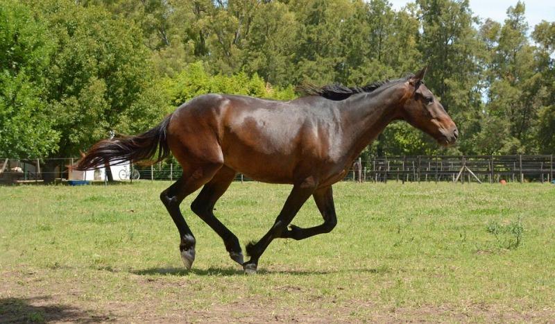 É obrigatório que os cavalos estejam em dia com os exames de AIE e Mormo a fim de transitar entre estados e cidades; participação em eventos