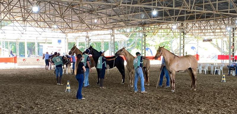 O portal Cavalus e a ZRTV transmitem ao vivo pela internet as disputas do cavalo Campolina que ocorrem no Agrocentro, sede do Sindicato Rural