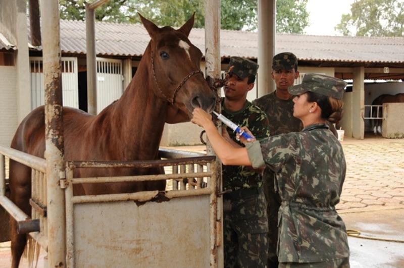 Desde que o mundo é mundo, o cavalo é usado em combate. Não é diferente no Exército Brasileiro, e se faz necessário e Medicina Veterinária