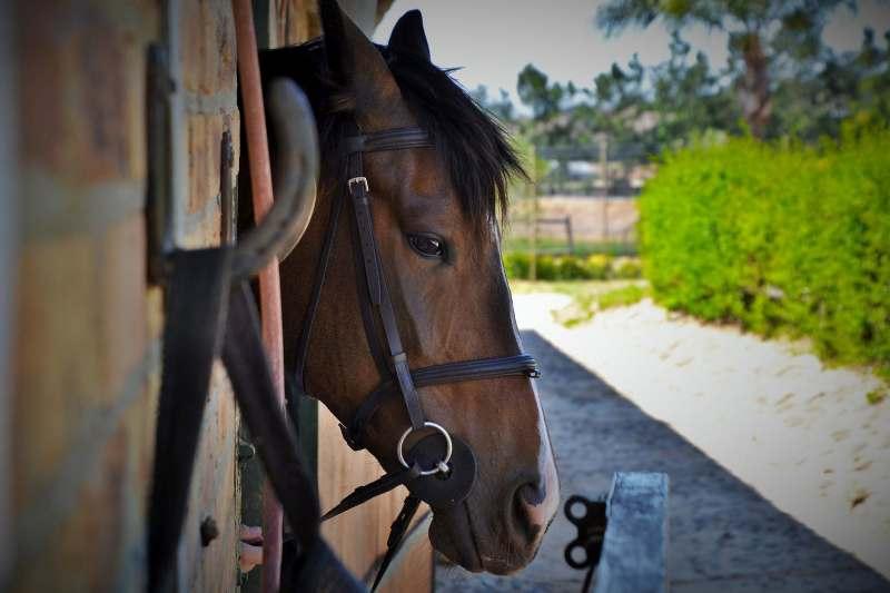 A maneira como você projeta a estrutura do seu celeiro ou pavilhão de baias oferta não apenas bem-estar aos cavalos, como também economia