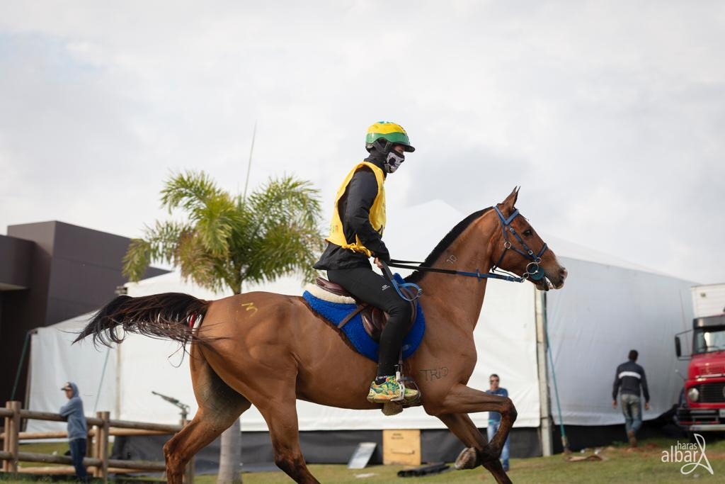 Brasileiro montando Cavalo Árabe fica no Top 10 do Ranking Mundial de Enduro