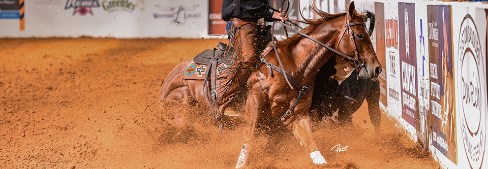 O cavalo de Working Cow Horse demonstra cow sense, tem capacidade para ser facilmente controlado, enquanto facilita o trabalho nos ranchos