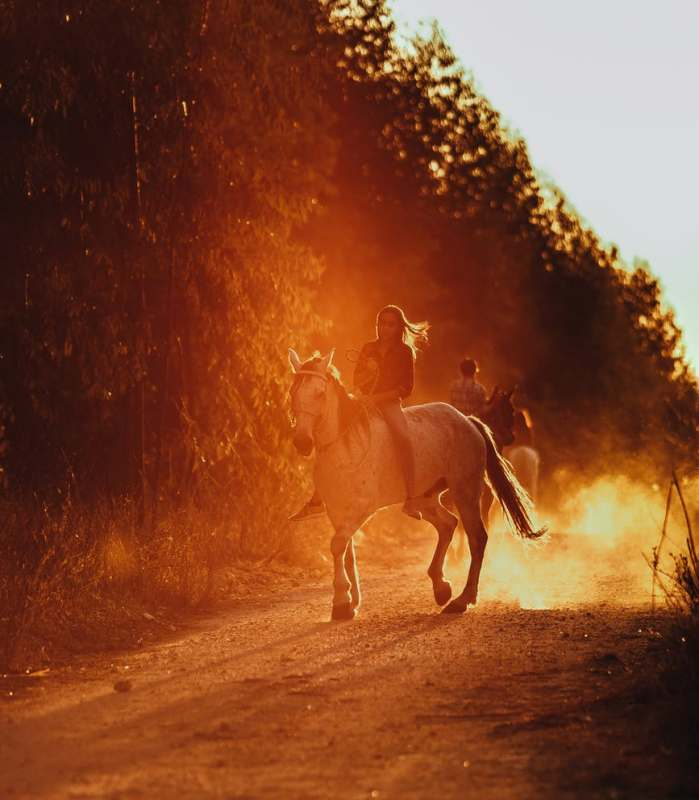 É difícil colocar em palavras o quanto o cavalo significa para a maioria dos cavaleiros, mas nós vamos tentar; veja esses 10 motivos