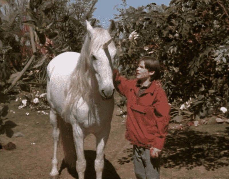 Em Nico, o Unicórnio, um menino de 11 anos de idade luta para lidar com uma deficiência quando encontra um pônei que vira seu amigo