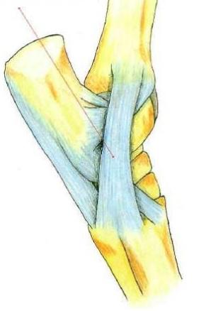 A fim de conhecer como seu cavalo se movimenta você precisa entender o sistema muscular-ósseo dele; veja esses princípios básicos