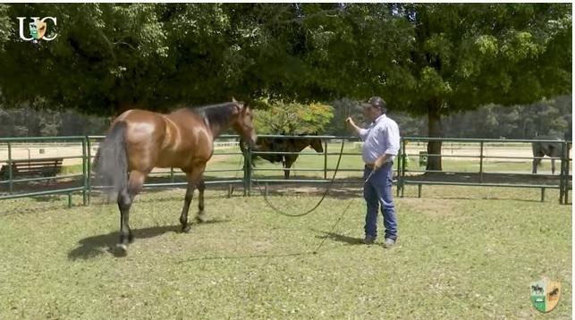 O Mensagem a Cavalo da TV UC de hoje continua falando com você sobre iniciação de potros e no vídeo de hoje controle de movimento dos cavalos