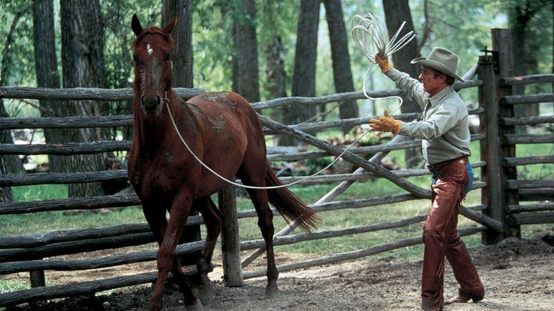 Se você é apaixonado mesmo por cavalo, certamente já viu esses filmes; mas não custa nada aproveitar as férias para ver ou rever