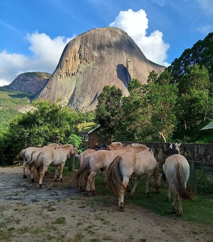 Cavalgada em Domingos Martins: Paulo Junqueira conta na coluna de hoje sobre a Pedra Azul e seus cavalos Norwegian Fjord Horse
