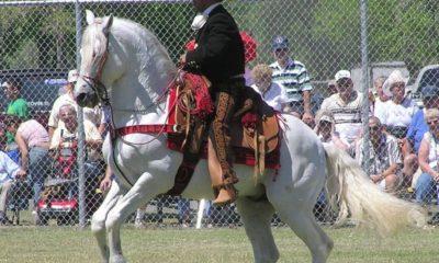 Confira seis curiosidades sobre o cavalo Azteca