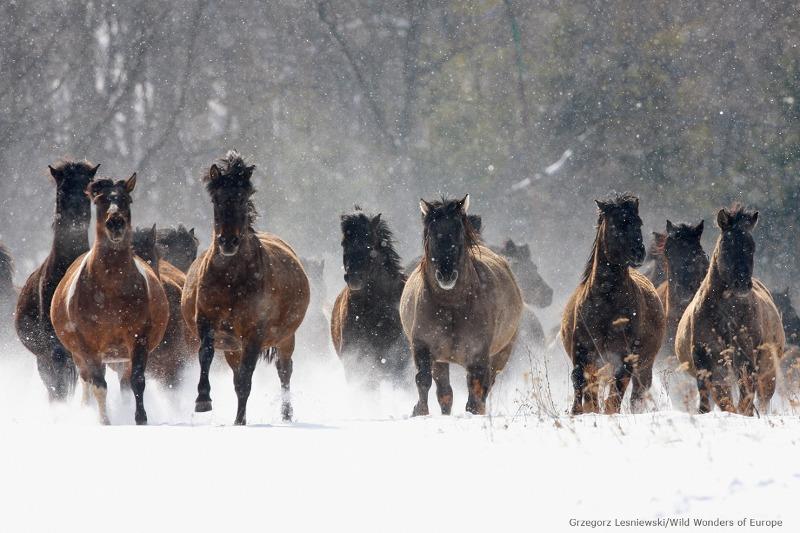 Paulo Junqueira comenta em sua coluna de hoje sobre esse passeio mágico da Cavalgada no Parque Nacional pelas florestas da Polônia em Hucul