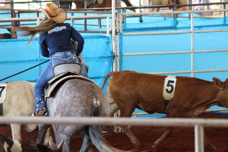 Copa Laredo Blue de Ranch Sorting aconteceu na pista coberta do Haras Terra, em Narandiba/SP, com mais de 500 inscrições; veja como foi!