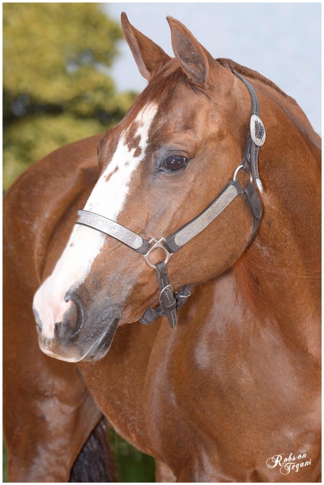 A Fazenda Santa Maria, cria cavalos voltados ao Trabalho; e entre outros, é a casa dos garanhões Rey For Jackson e SM Shake Your Boon