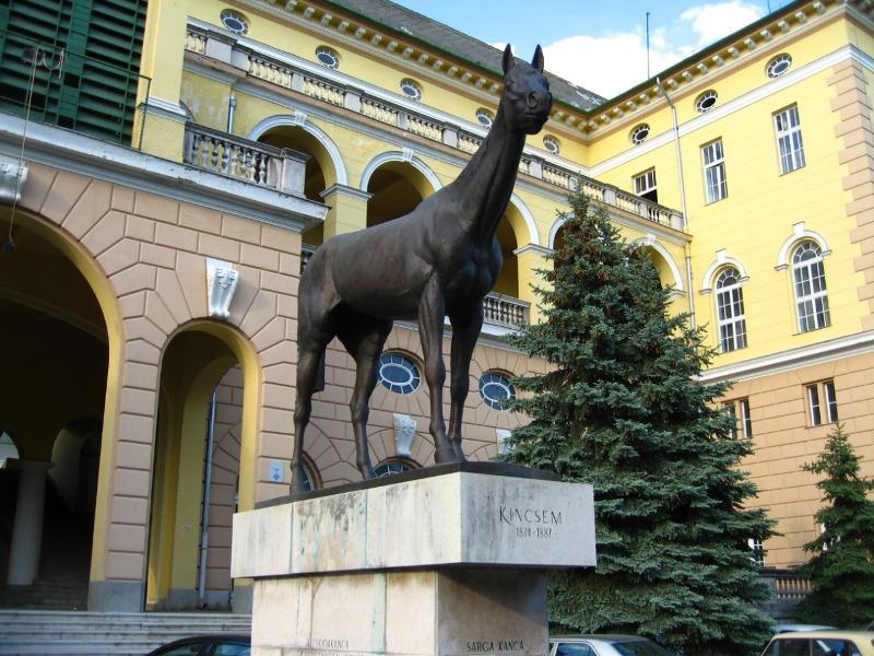 Luciano Rodrigues, cavaleiro e pesquisador, conta a história de Kincsem, o cavalo húngaro com maior índice de vitórias em corrida