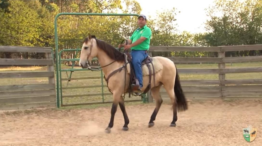 No Mensagem a Cavalo você confere como fazer o seu animal transferir o peso para trás e ficar leve de frente; ensine parada para o seu cavalo