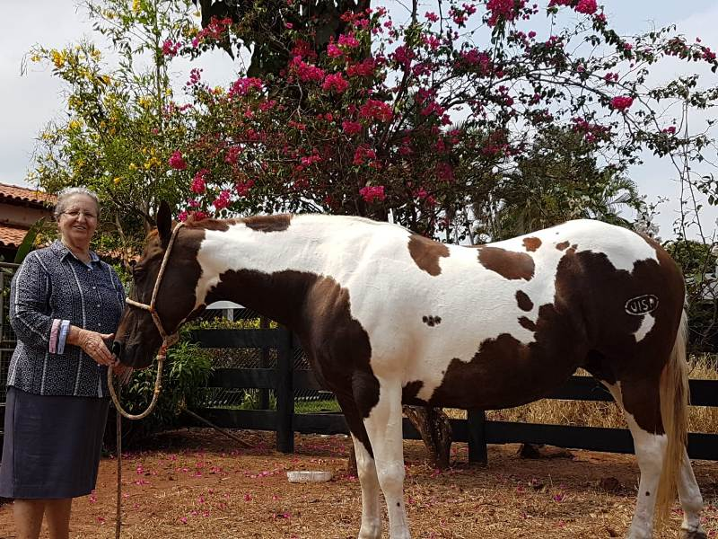 Tendo contato com cavalos desde criança, o criador e competidor segue em busca do fomento da raça; é apaixonado por cavalos e pelo Paint