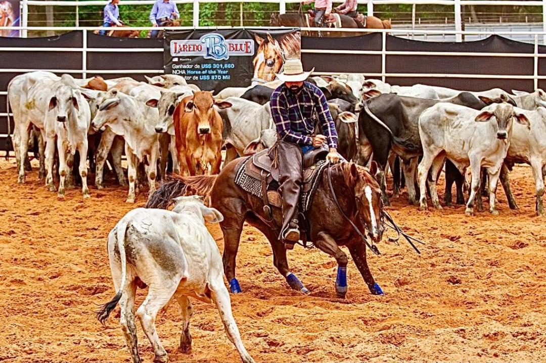 Apaixonado por cavalos, Aloísio Junior mantém seu haras na Bahia