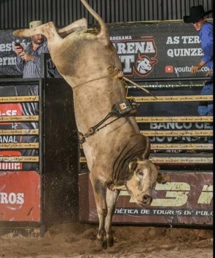 Conheça a história da Cia Juliano Domingos, que pela 1a. vez colocará a leilão touros de pulo criados por ela ao longo de anos de seeção