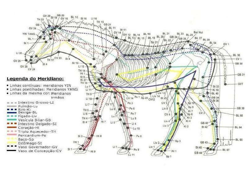 Criadores e proprietários investem cada dia mais em tecnologia e saúde para os animais de esporte, por isso cuidado com a anemia em equinos