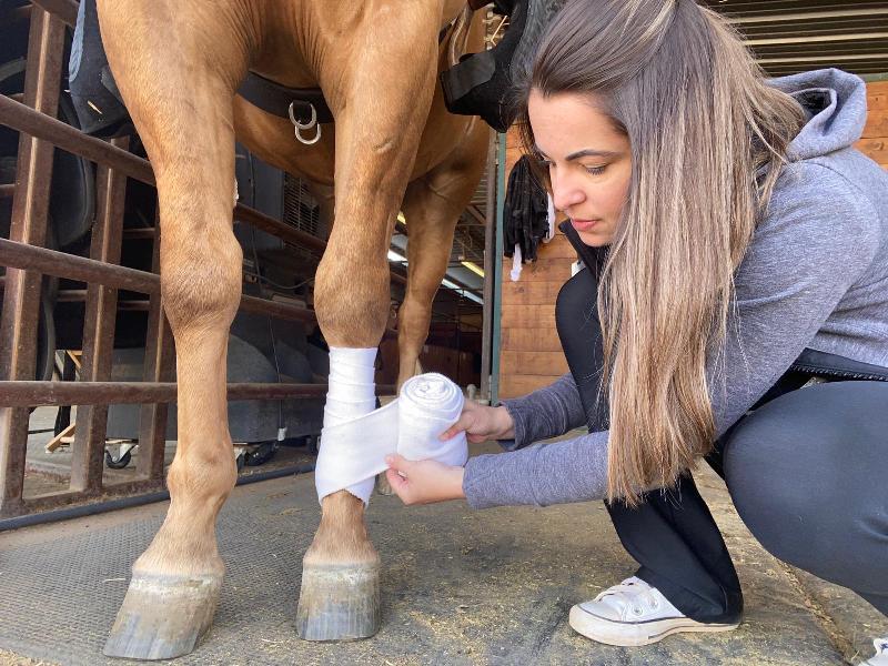 As ligas de trabalho são fundamentais para proteger os tendões e ligamentos dos cavalos durante as atividades físicas; veja essas dicas