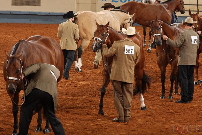 No Halter, ou Conformação, os cavalos entram na pista puxados pelo cabresto e são julgados pela sua conformação e adequação como reprodutores