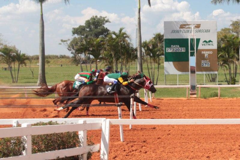 My Jess For Me vence principal prova da segunda reunião do ano no Jockey Club de Sorocaba; South America Racing Challenge foi cancelado